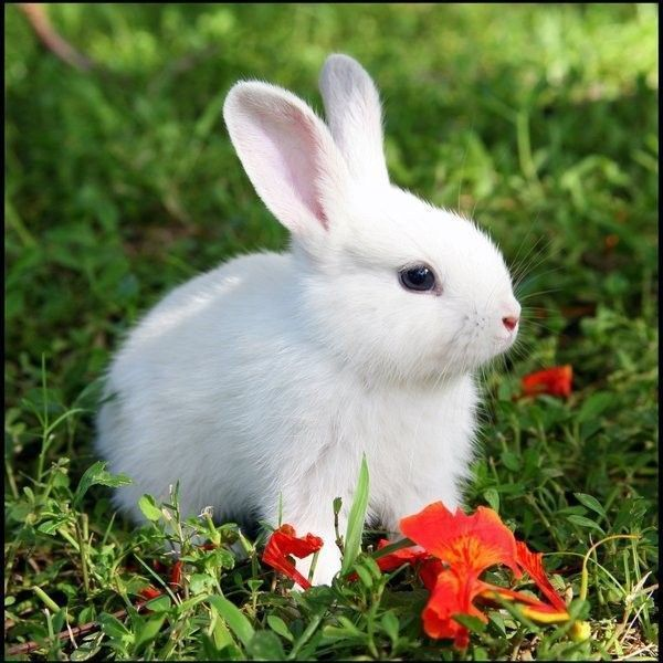 Animaux lapins - Image lapin a imprimer ...