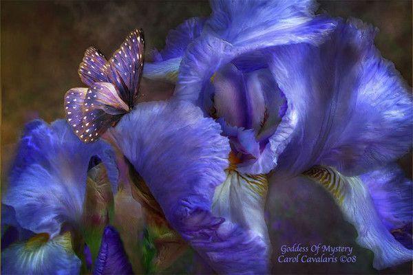Bleu ... iris