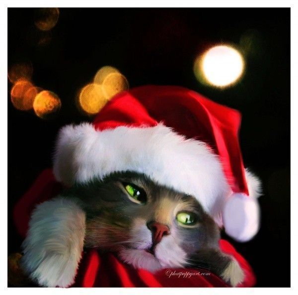 Chat ... Noël