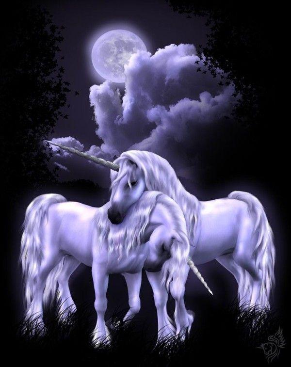 Imaginaire  ... licorne