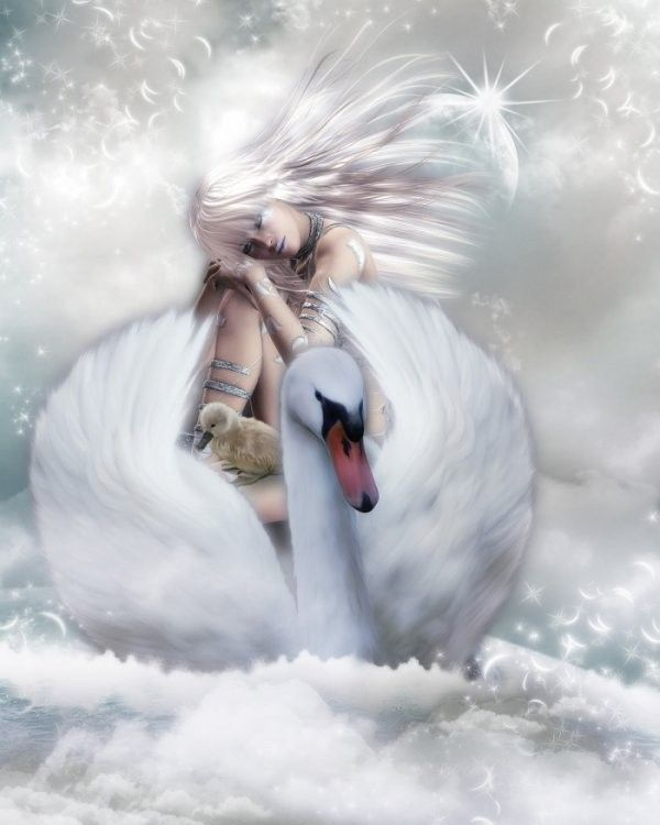 Cygne ... Belle image