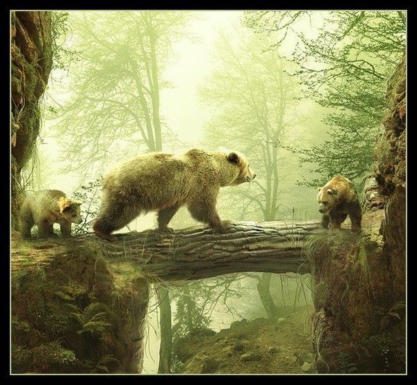 Ours ... Belle image