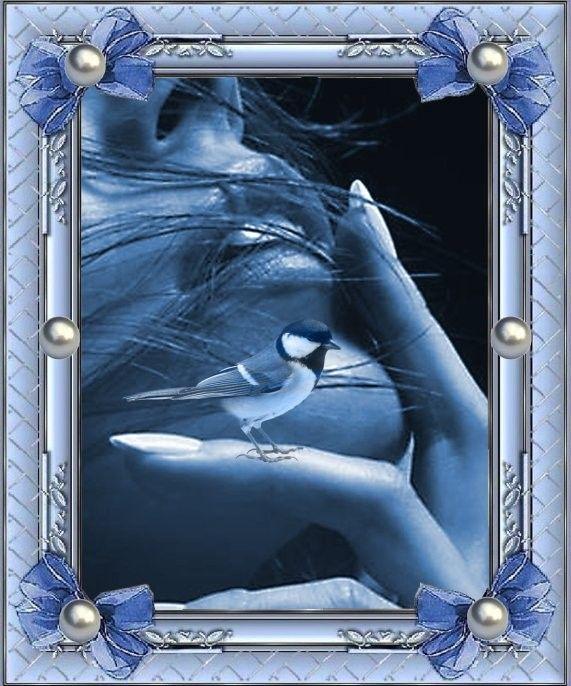 Oiseau  ... Bleu !   Belle image