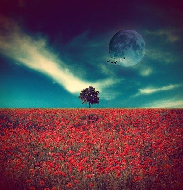 Rouge  ... paysage