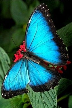 Bleu ... papillon