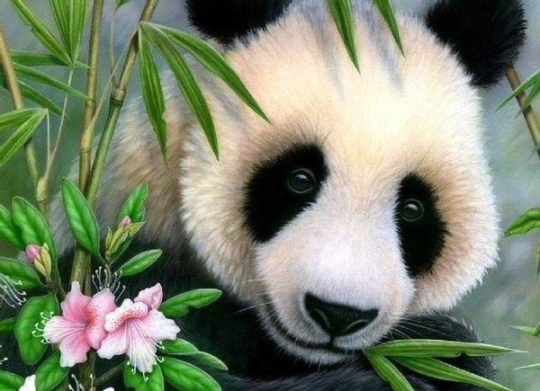 Panda ... Belle image