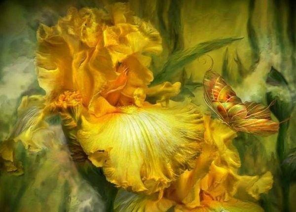 Jaune ... Belle image   iris et papillons