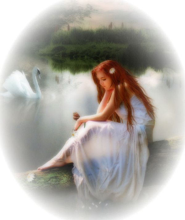 Blanc ... belle image ... cygne douceur