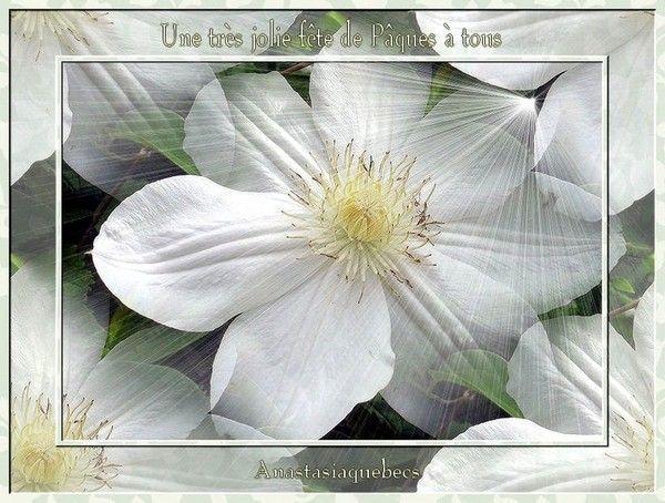 Belles images 55beb313