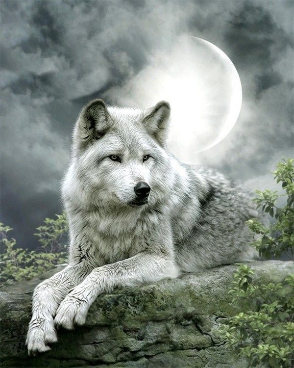 Loups ... Belle image
