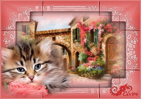 Chat ... Belle image