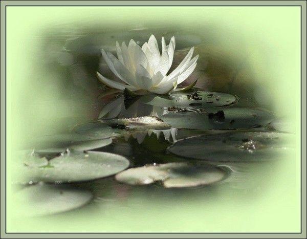 Belle image ... Zen  ... Jolis lotus
