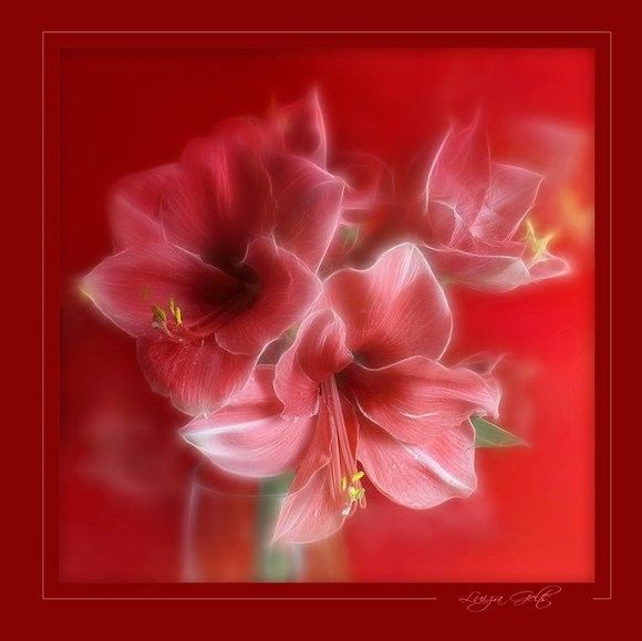Fleurs ... Belle image