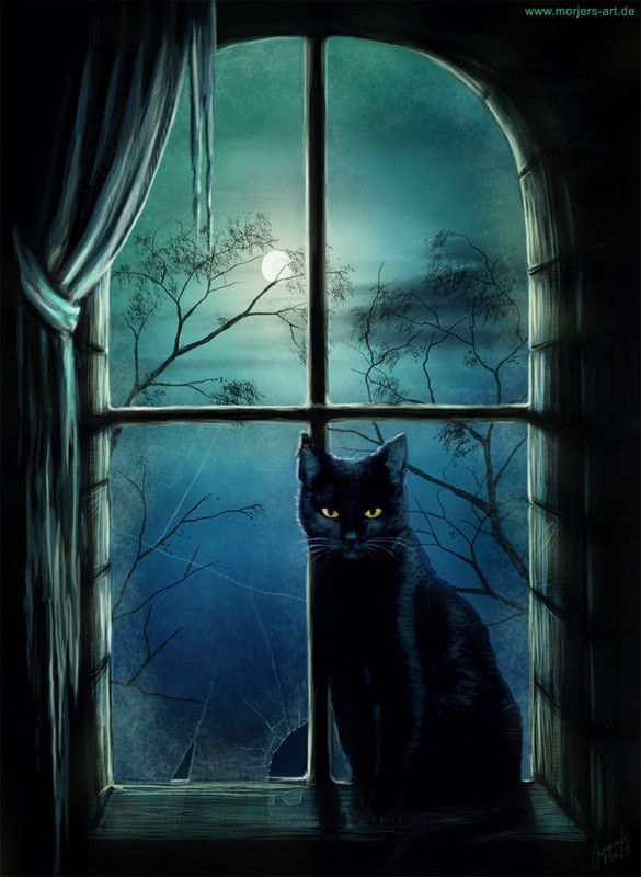 Chat ... Lune  ...