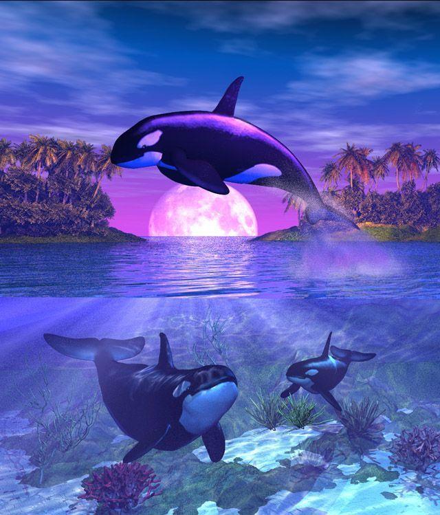 Dauphins et sirene 3 - Dessin d orque ...