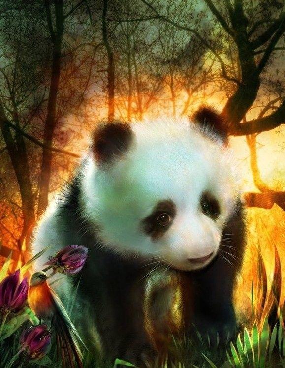 Pandas ... Belle image
