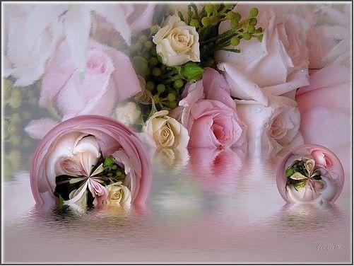 Roses ... des roses