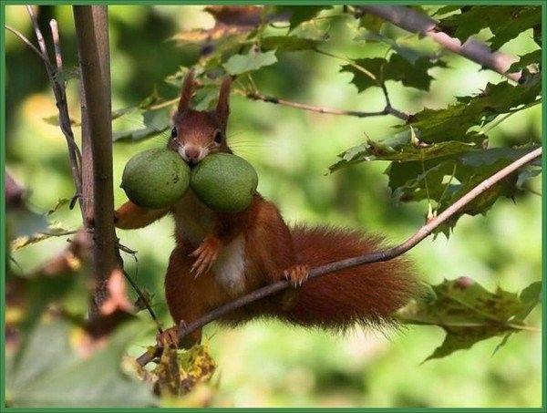 Ecureuils  ...