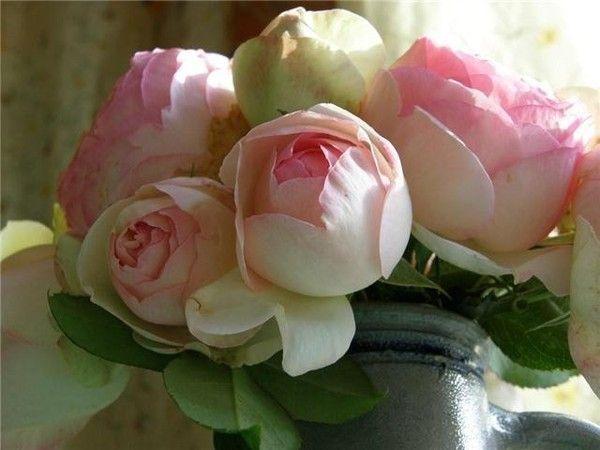 roses ... merci Jacotte pour ces roses