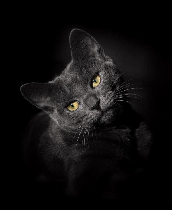 Chat ... noir ! ... belle image