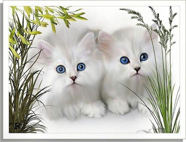 Chats ... Belle image