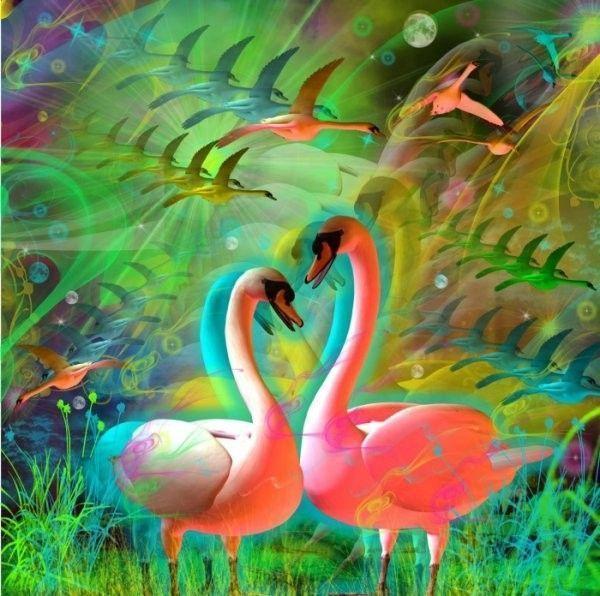 Colorido  ... Belle image   Cygnes