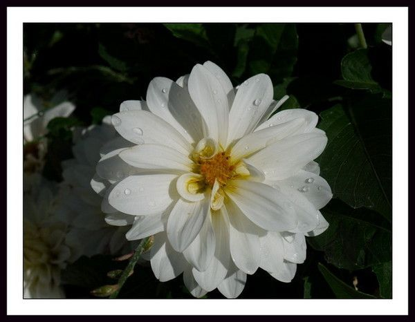 Fleurs ...