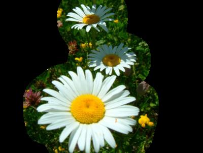 Blanc ... fleurs