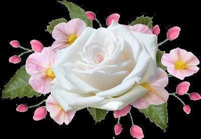 Fleurs ... rose
