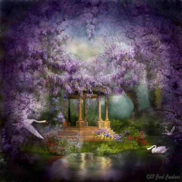 Mauve ... Violet ... Belle image