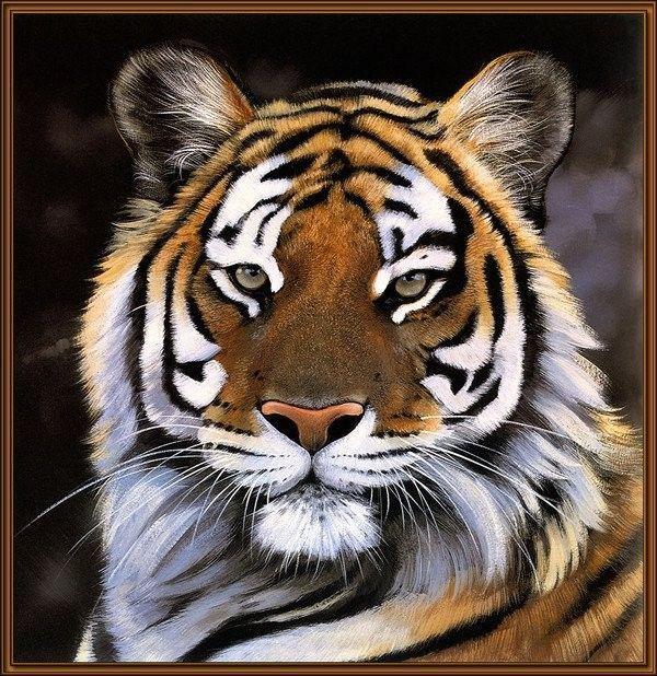 Félins .. Tigre