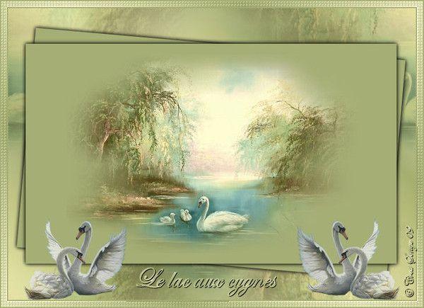 Cygnes ... Le lac des cygnes