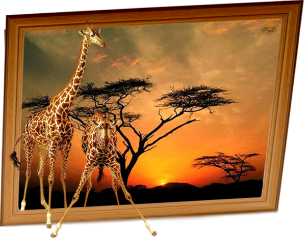 Animaux Divers ... Girafes