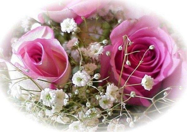Rose  ... jolies roses