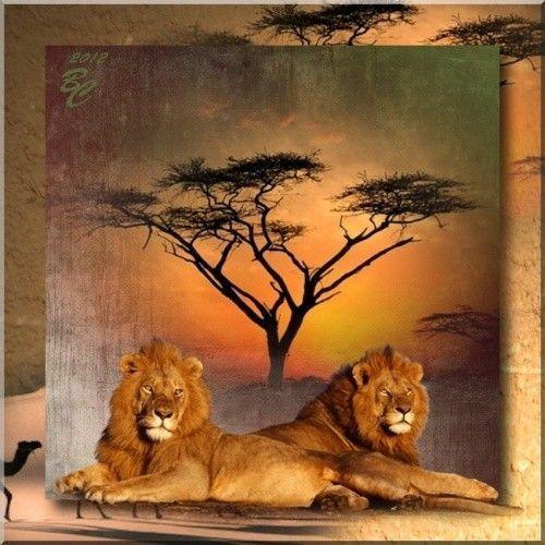 Félins  ... Lions  ... Belle image de ma popine Cléo