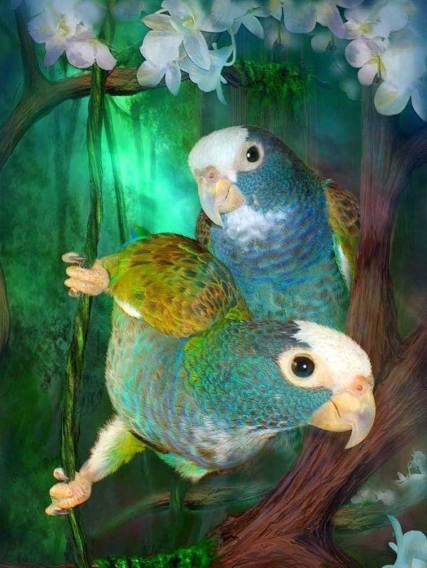 Oiseaux ...