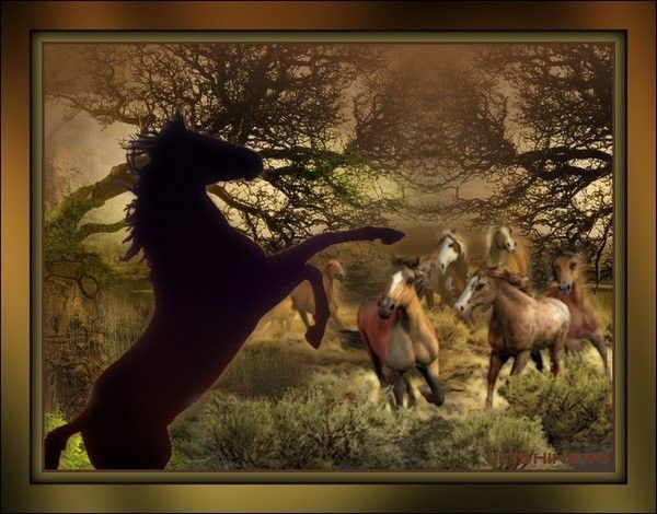 Cheval ... Belle image