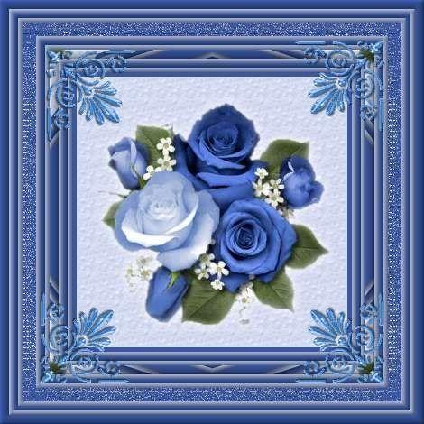 Bleu ... jolies roses