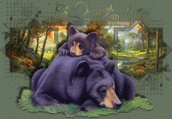 Animaux ... Ours