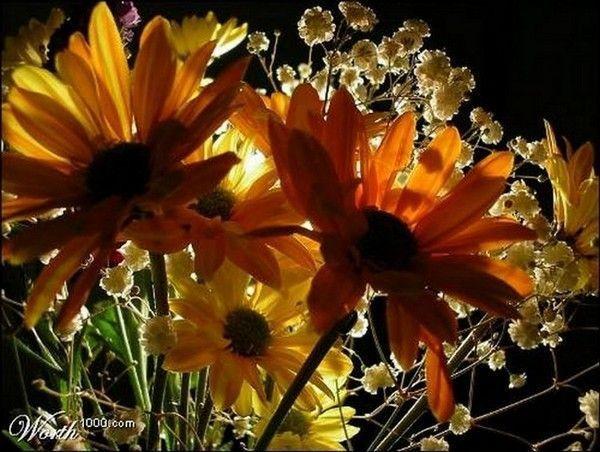 Marron .. fleurs