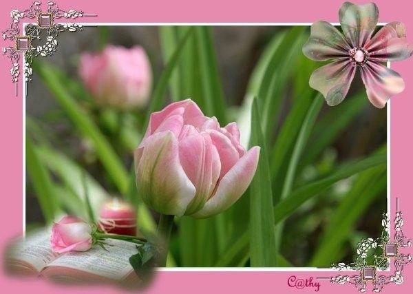 Fleurs  ... jolies tulipes