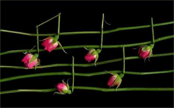 Musique  ... notes