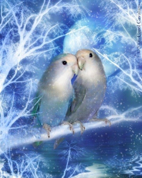 Oiseau ... Belle image