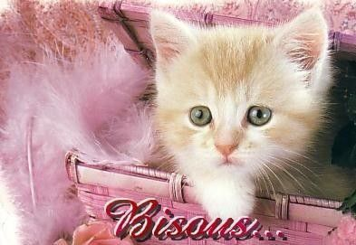 Bisous  ...