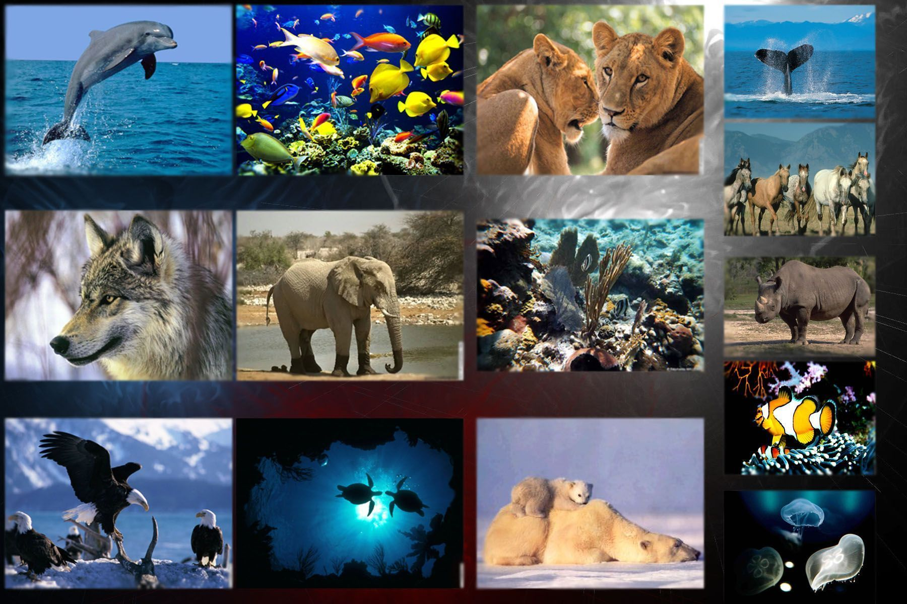 planète TERRE  ...   faune